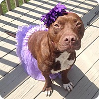 Adopt A Pet :: Gretel- FREE KISSES!! - Wood Dale, IL