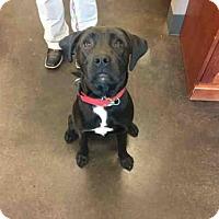 Adopt A Pet :: A029211 - Norman, OK
