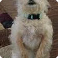 Adopt A Pet :: Little Bit - Sylvania, GA