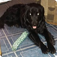 Adopt A Pet :: Teddy - Hamilton, ON