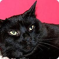 Adopt A Pet :: Cindy Lou - Plainville, MA