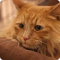 Adopt A Pet :: Rocco - Sacramento, CA