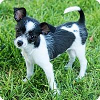 Adopt A Pet :: Bubbles - La Habra Heights, CA