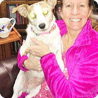 Adopt A Pet :: Patches - Plain City, OH