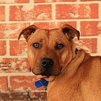 Adopt A Pet :: Max - Flushing, MI