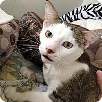 Adopt A Pet :: Robby - Colmar, PA