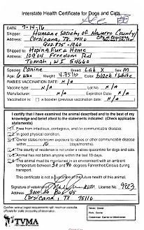 Labrador Retriever Puppy for adoption in Mauston, Wisconsin - Ace