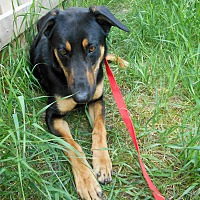 Adopt A Pet :: Chief - Palmyra, NE