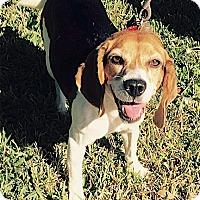 Adopt A Pet :: Shipley - Houston, TX
