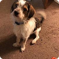 Adopt A Pet :: Charlie pending adoption - Manchester, CT