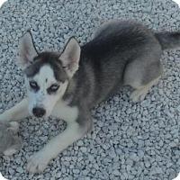 Adopt A Pet :: Hector - Orlando, FL