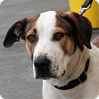 Adopt A Pet :: Suzy Q - Palmdale, CA