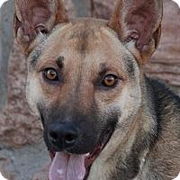 Adopt A Pet :: Jade von Jagdbar - Los Angeles, CA