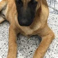 Adopt A Pet :: Hans - Tucson, AZ