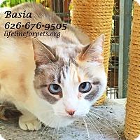 Adopt A Pet :: Beautiful BASIA - Monrovia, CA