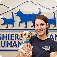 Adopt A Pet :: Decker - Cashiers, NC
