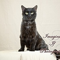 Adopt A Pet :: Salem - Crescent, OK