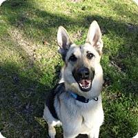 Adopt A Pet :: Lola - Green Cove Springs, FL