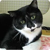 Adopt A Pet :: Sugar - Brea, CA