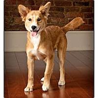 Adopt A Pet :: Layla - Owensboro, KY