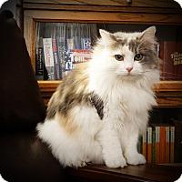 Adopt A Pet :: Priscella - Xenia, OH