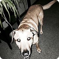 Adopt A Pet :: Gus - Evergreen Park, IL