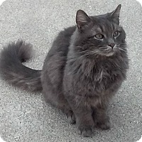 Adopt A Pet :: Floyd - Mount Clemens, MI