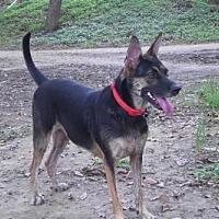 Basenji Mix Dog for adoption in Richmond, British Columbia - Merry