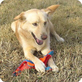 Shepherd (Unknown Type)/Labrador Retriever Mix Dog for adoption in Godley, Texas - Emmylou