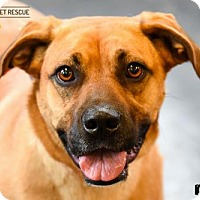 Adopt A Pet :: Roxy - St Paul, MN