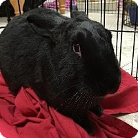 New Zealand Mix for adoption in Woburn, Massachusetts - Blackjack