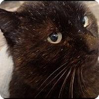 Adopt A Pet :: Bandit - Colorado Springs, CO