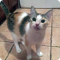Adopt A Pet :: Lizette - Mississauga, Ontario, ON