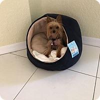 Adopt A Pet :: Chessie - Boca Raton, FL