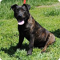 Adopt A Pet :: Pepper - Parsons, KS