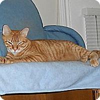 Adopt A Pet :: Mango - College Station, TX
