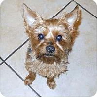 Adopt A Pet :: Mia Bella - Bunnell, FL