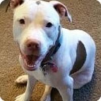 Adopt A Pet :: LUCYLU - Higley, AZ