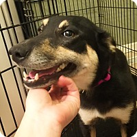 Adopt A Pet :: Jasmine - Huntsville, AL