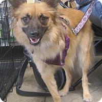 Adopt A Pet :: Dakota - West Los Angeles, CA