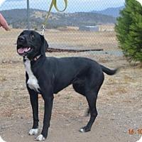 Adopt A Pet :: Faith - Yreka, CA