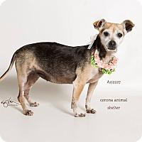 Adopt A Pet :: KENNEL 12 - Corona, CA