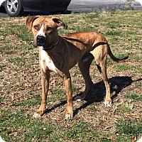 Adopt A Pet :: Flint - Greensboro, NC