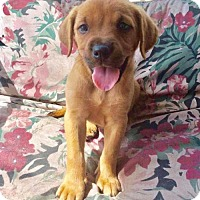 Adopt A Pet :: Aurora C. - Tampa, FL