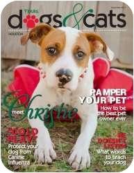 Boxer/Pointer Mix Dog for adoption in Houston, Texas - Christie