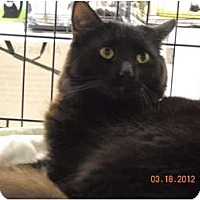 Adopt A Pet :: Willow - Riverside, RI