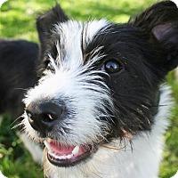 Adopt A Pet :: BECCA **video!** - Nampa, ID