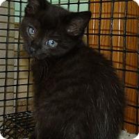 Adopt A Pet :: CAFI - Acme, PA
