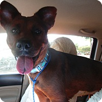 Adopt A Pet :: MOCHA - Jacksonville, FL