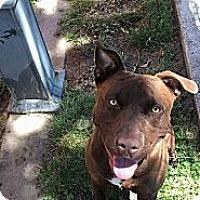 Adopt A Pet :: Hershey - Lodi, CA